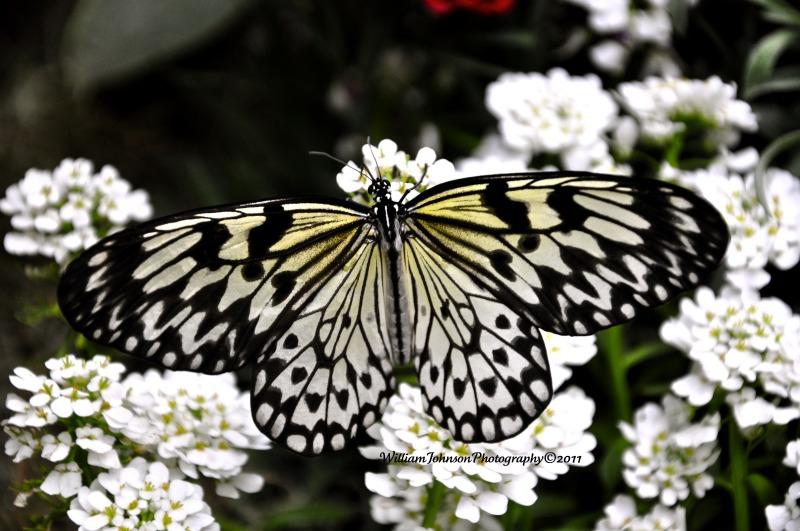 Butterfly Jungle | Safari Park