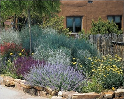 Xeriscape Ideas Albuquerque