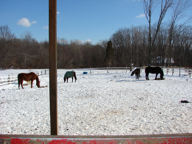 Prepare Your Horses For Winter