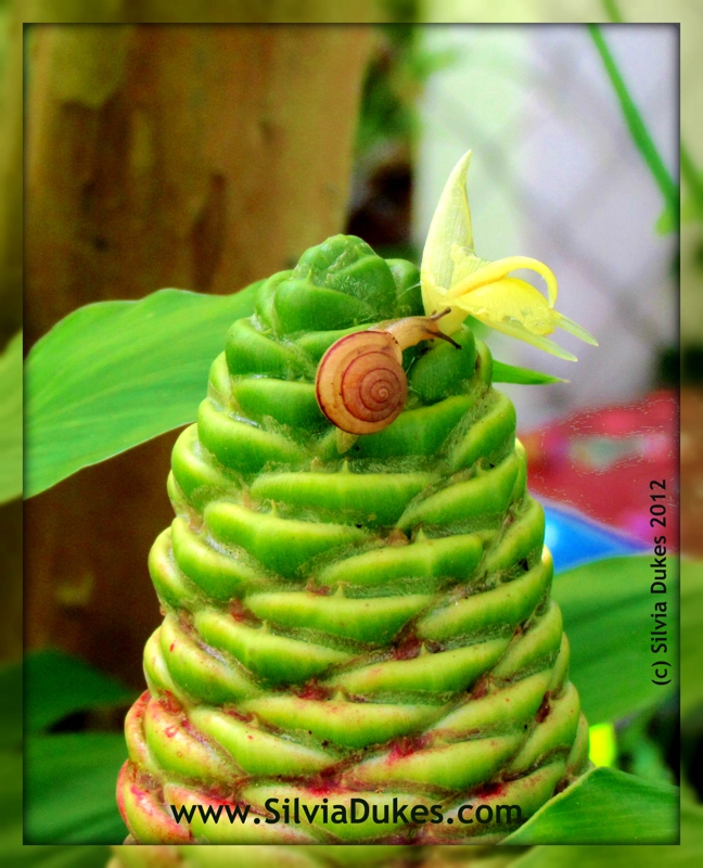 Snail on Lily Cone Photo by Silvia Dukes
