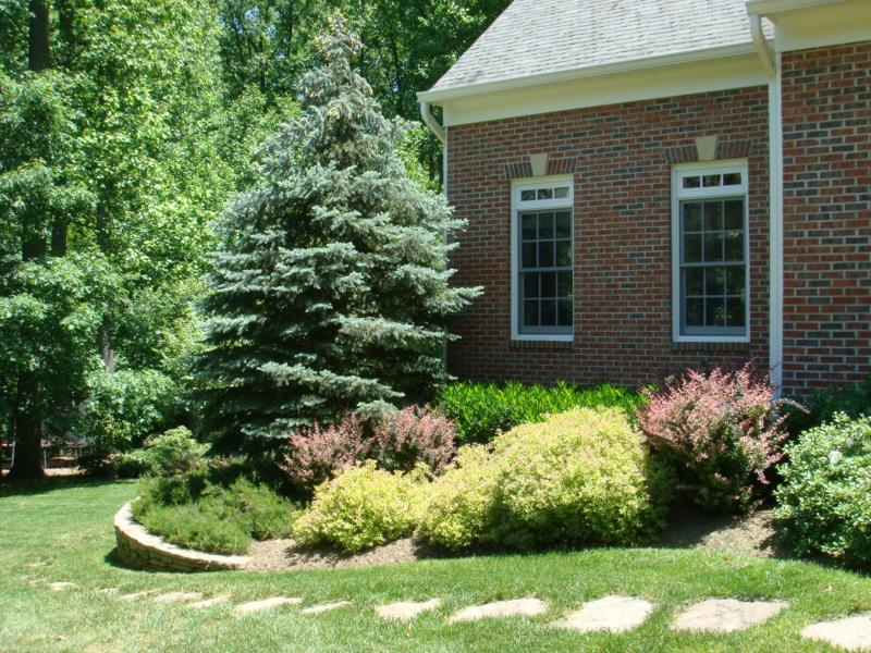 Getting Your House Ready To Sell Series Plants Shrubs