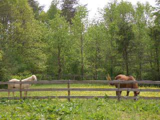 View of Horses in Fenced Pasture