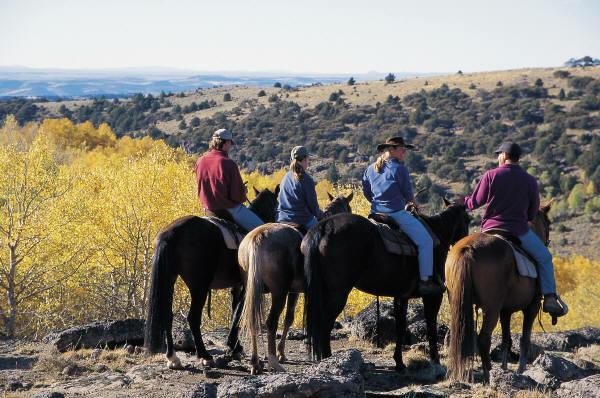Horseback Trail Riding. Horseback trail riding