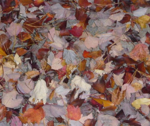 Fallen Leaves 2010 Baltimore HomeRome Realty