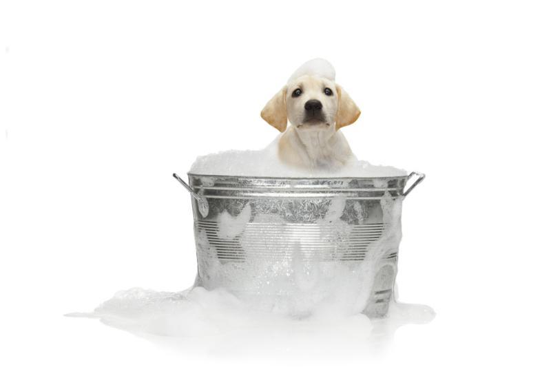 dog getting bath