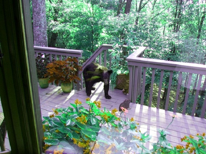 Bear on the porch