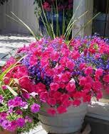 baskets blooming - Gardening tips