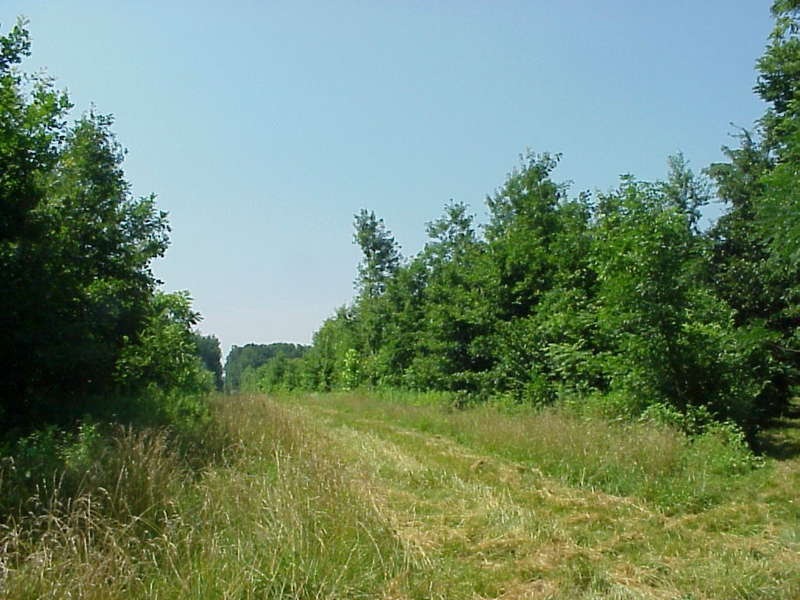 Acreage for sale in Tippecanoe County in West Lafayette, In close to Purdue and West Lafayette wooded land with creek and potential farm ground listed for sale by Sharon and Bruce Walter at Keller Williams Realty in Lafayette, Indiana 47905