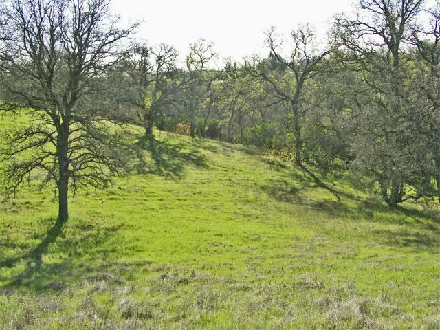 ar125527819655796 Northern California Land for Sale   1.5 Acres of Oak Studded Land   $15,000   Rancho Tehama CA!