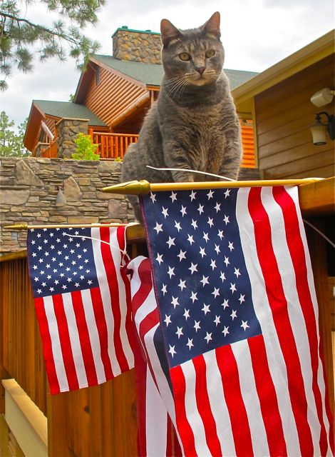 Cat and flag