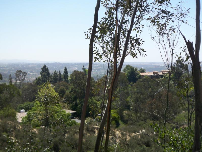 Views in Rancho Santa Fe California