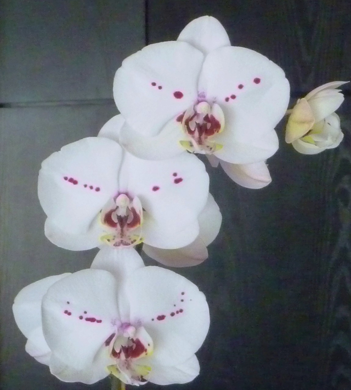 orchid...HomeRome 410-530-2400