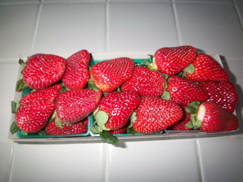 Get a load of these strawberries