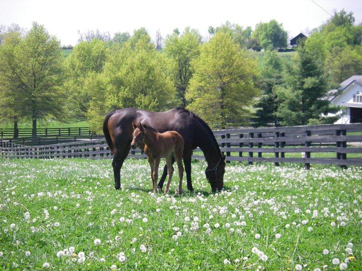 Lexington Ky Horse Farm Kentucky Horse Farms For Sale on Real Estate Lexington Ky