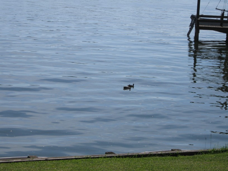 Lake Livingston Real Estate, The Landing