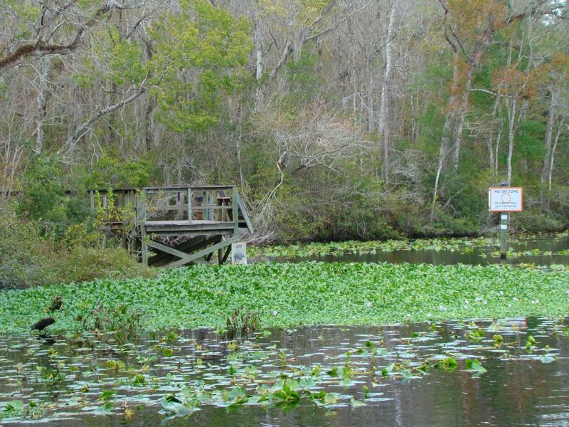 Black Creek in Middleburg, Fl