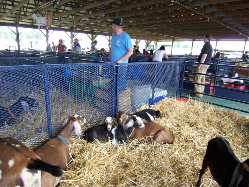 The 162nd Dutchess County Fair In Rhinebeck, New York