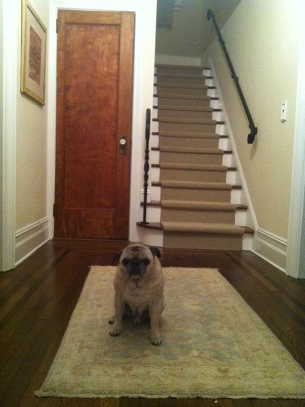 Dog Carpet Runner Floor Matttroy