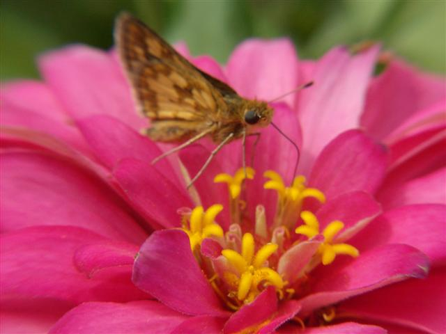 Moth on Flower by Ann Hayden