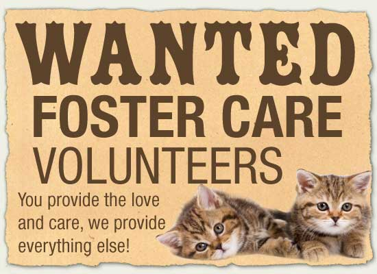 how to become a foster parent for animals