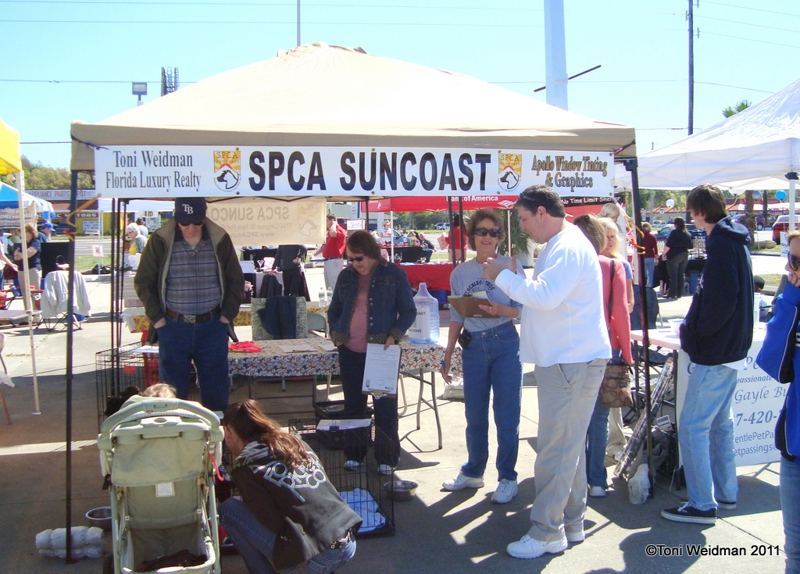 lokey subaru held an event for spca suncoast and other animal rescue groups. Black Bedroom Furniture Sets. Home Design Ideas