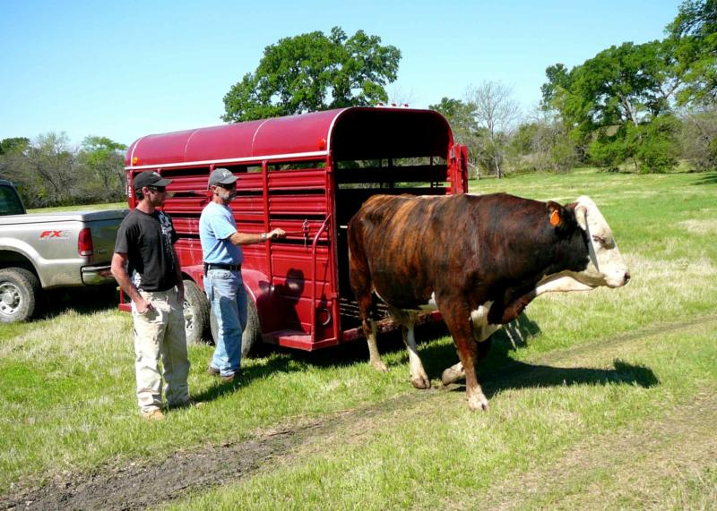 Taffy arrives at the Bull Pasture.