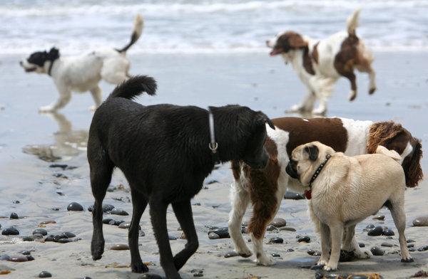Dogs Beach in Florida Dog Beach in Bonita Springs