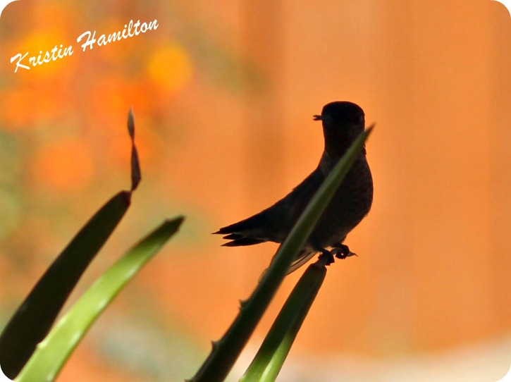 Enjoy the Beauty around You.....Hummingbirds Included