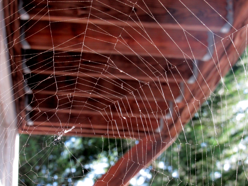 Beautiful Cobweb at Lake Anna, VA