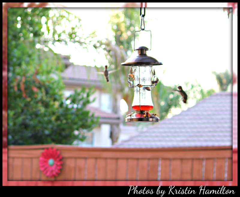 Bird Watching  Loma Linda CA