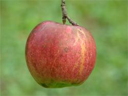 Apple Picking Orchards and Apple Farms Guide