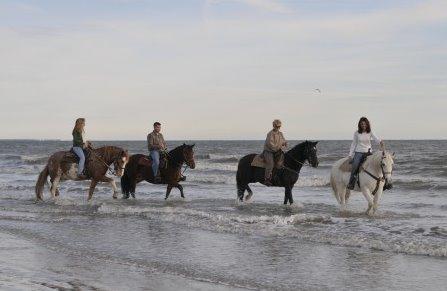 Three Oaks Carriage And Trail Company Jekyll Island Georgia Horseback Riding