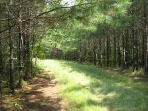 Land For Sale In Fayette County Alabama