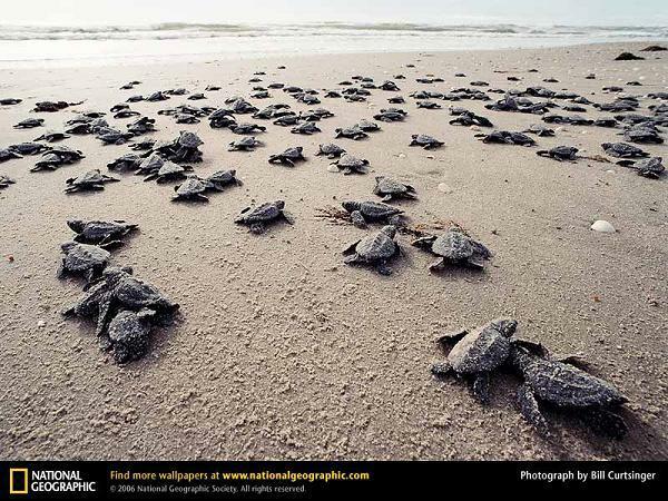 Sea Turtles in Texas Sea Turtle Nests on Texas