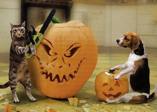 cat and dog with their jack-o-lanterns
