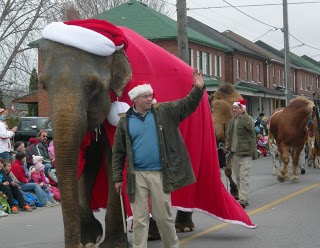 elephant from the bowmanville zoo in the bowmanville santa claus parade