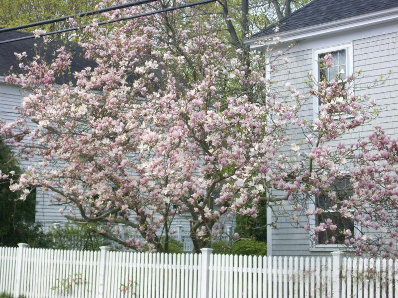 Bath Maine Tree City Usa For 12th Year