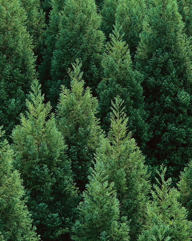 Where To Find A Christmas Tree In Naples Fl