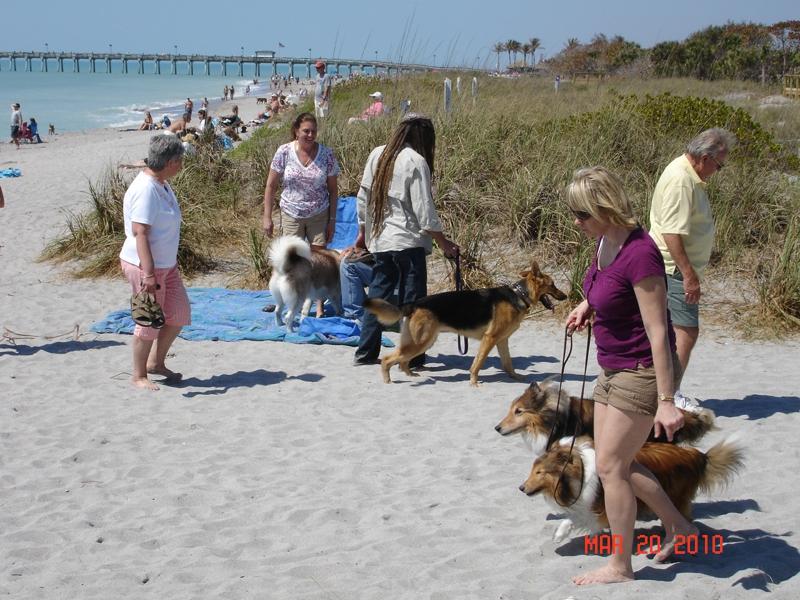 Dog Beach In Venice Fl