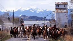 Montana Horse Round Up