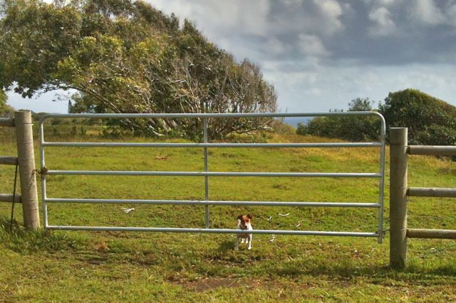 Speechless Sunday - good fencing for your dog yard