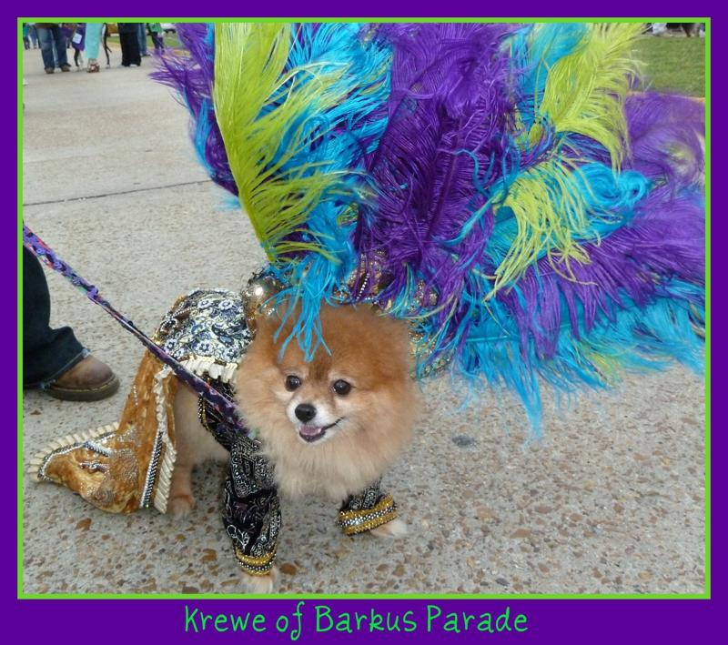 Krewe of Barkus Lake charles LA