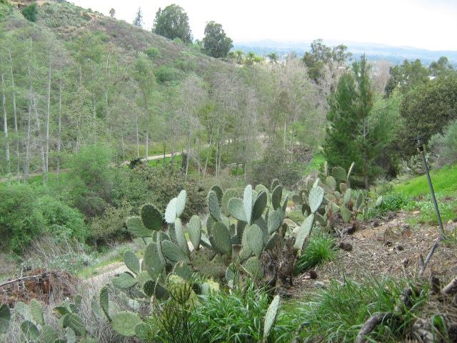 Westridge Estates Anaheim Hills Ca 92807