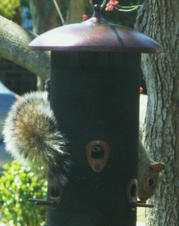 Squirrel...HomeRome 410-530-2400