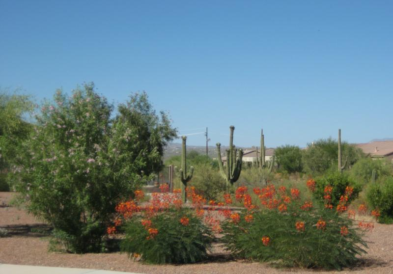 desert landscaping in Continental Reserve, Marana