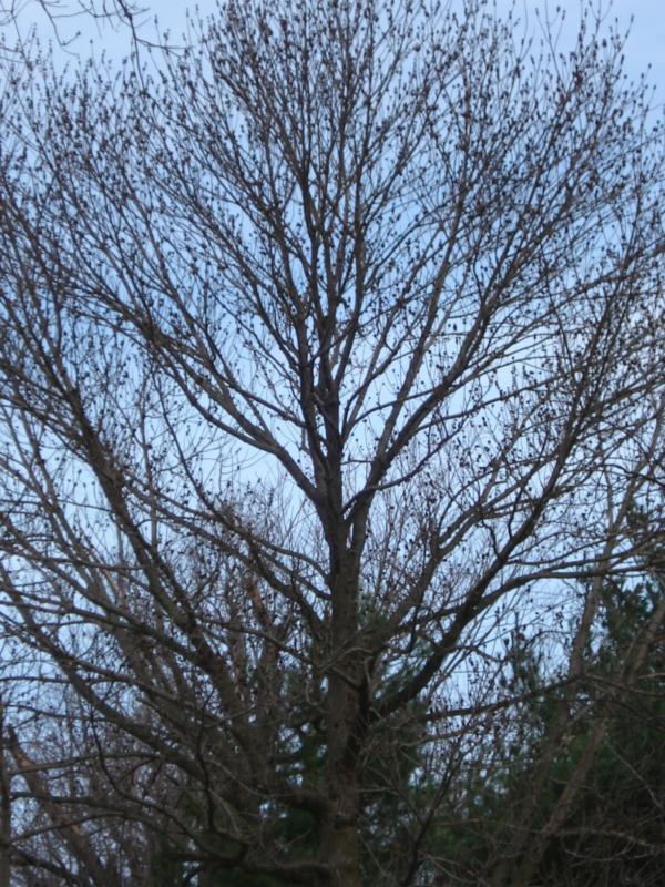 Bare trees HomeRome