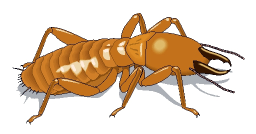 Termite Inspection Guidelines For Mortgage Loans