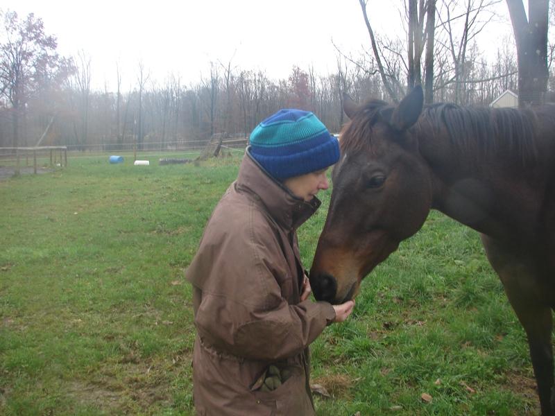 horse valentine day