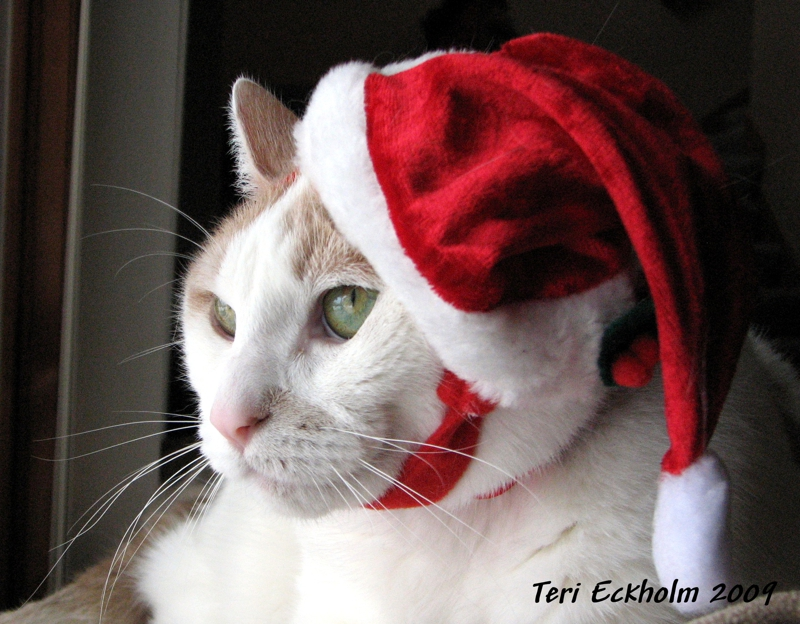 Merry Christmas lolCat by Teri Eckholm Realtor