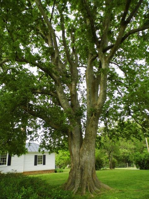 Farmville Va Historic Home For Sale Airy Green